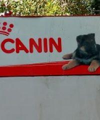 ROYAL CANIN ®